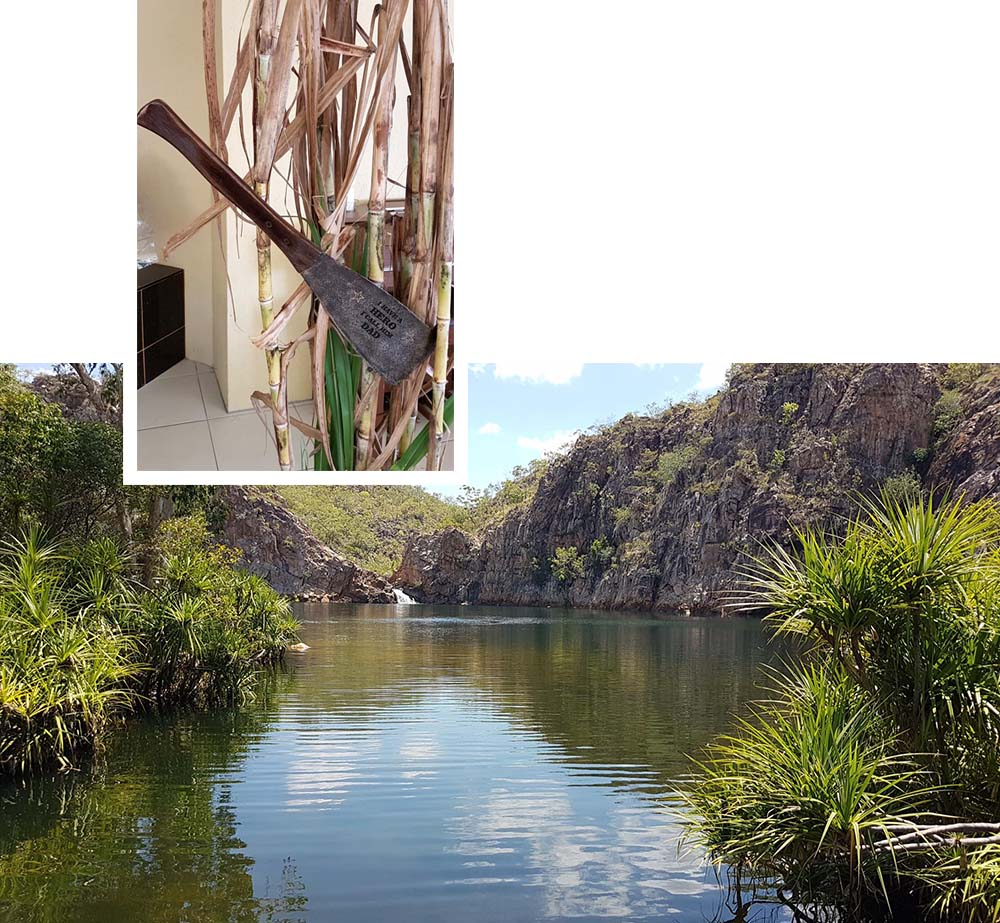 Katherine & Sugar Cane Image